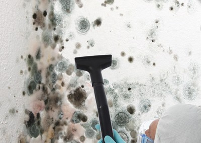 Black-Mold-Remediation-Burlingame