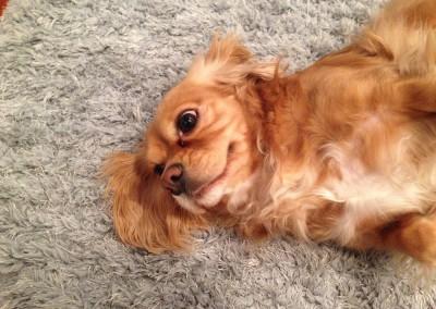 Burlingame-Dog-Poop-Cleaning