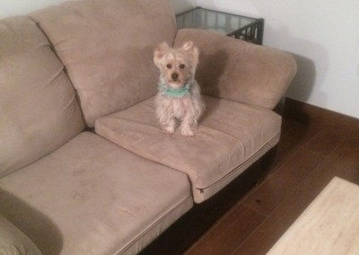 Burlingame-Sofa-Pet-Stain-Cleaning