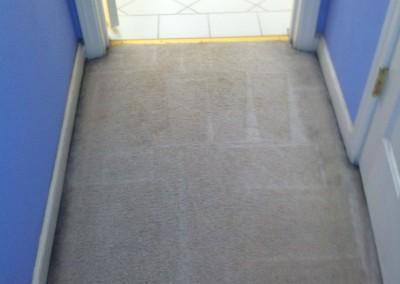Burlingame-Vomit-2-after-carpet
