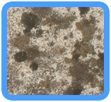 Water-Mold-Removal-Burlingame